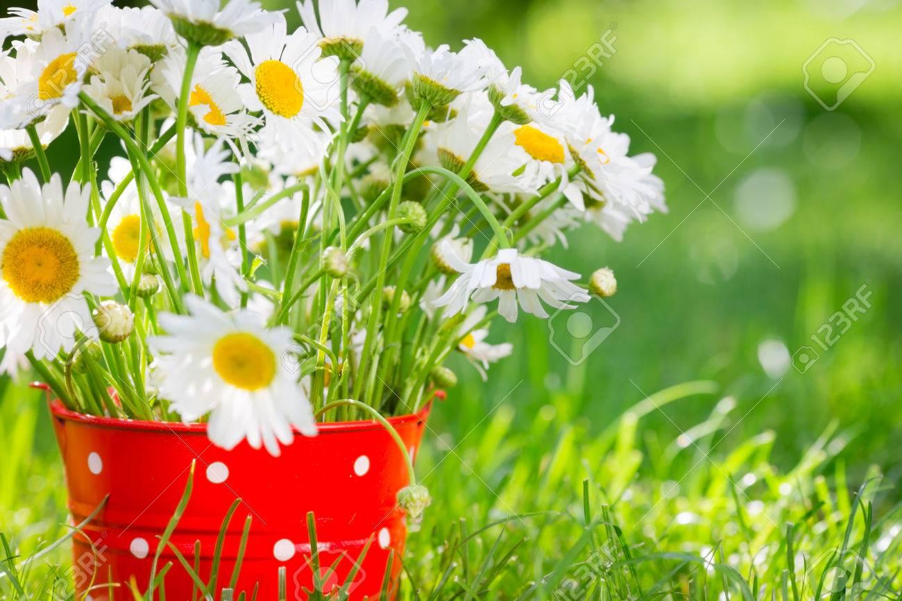 Mazzo Di Fiori Di Primavera.Immagini Stock Bellissimo Mazzo Di Fiori Di Primavera Nel