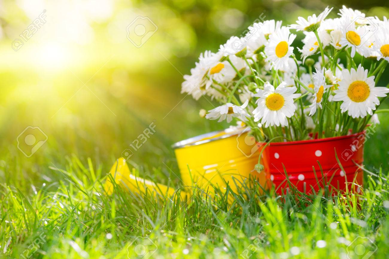 beautiful bunch of spring flowers in red bucket stock photo