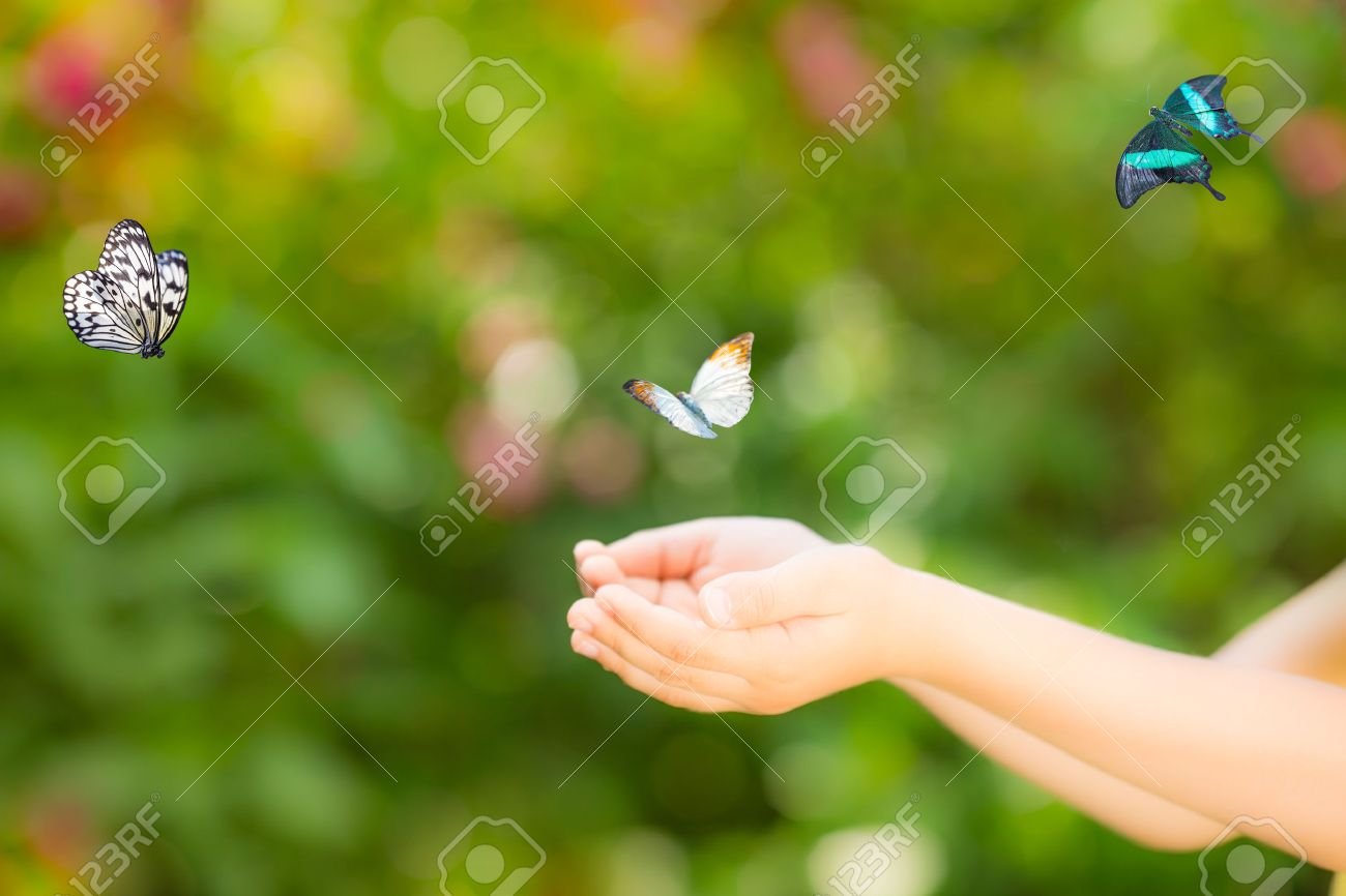 butterfly in hand stock photos royalty free butterfly in hand