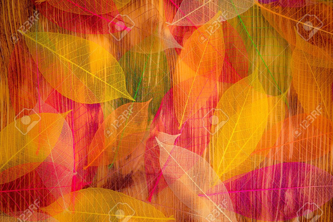 Autumn leaves texture. Abstract background Stock Photo - 44340705