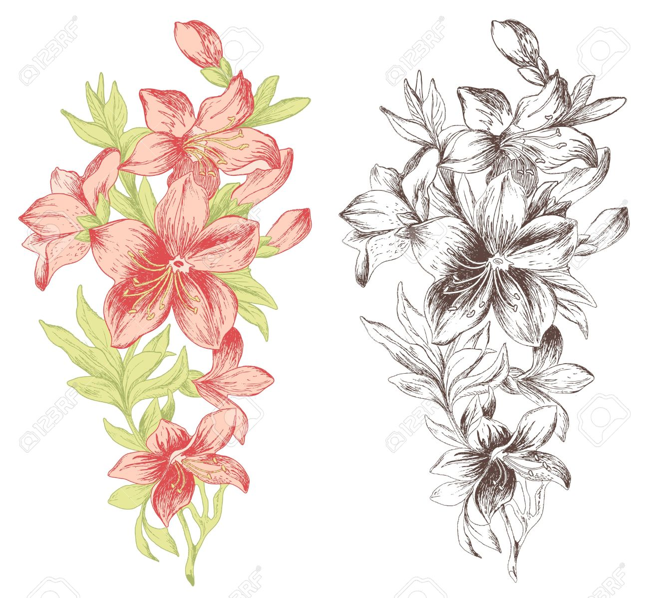 hand drawn flower images u0026 stock pictures royalty free hand drawn