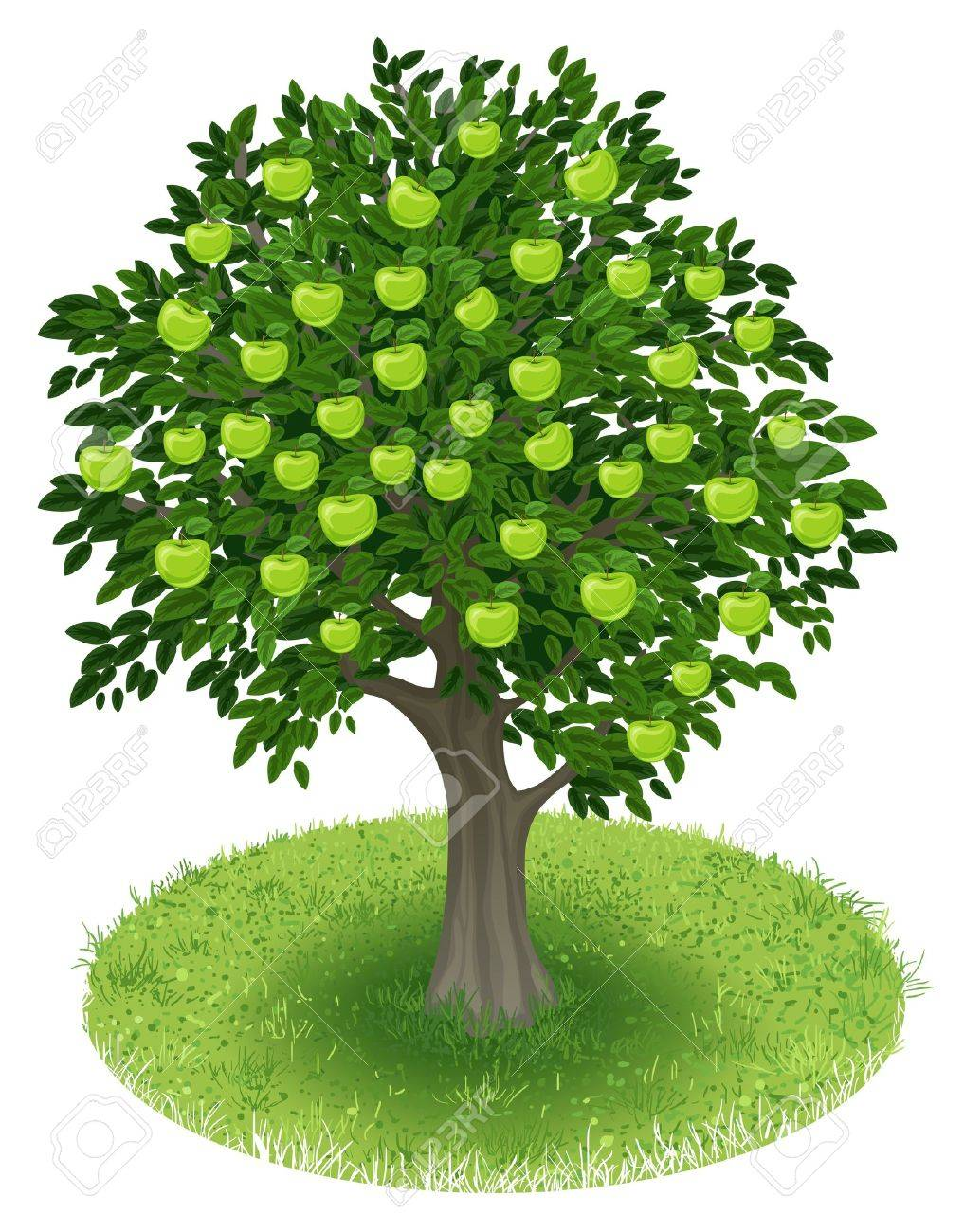 Summer Apple Tree with green apple fruits in green field, illustration Stock Vector - 19285540