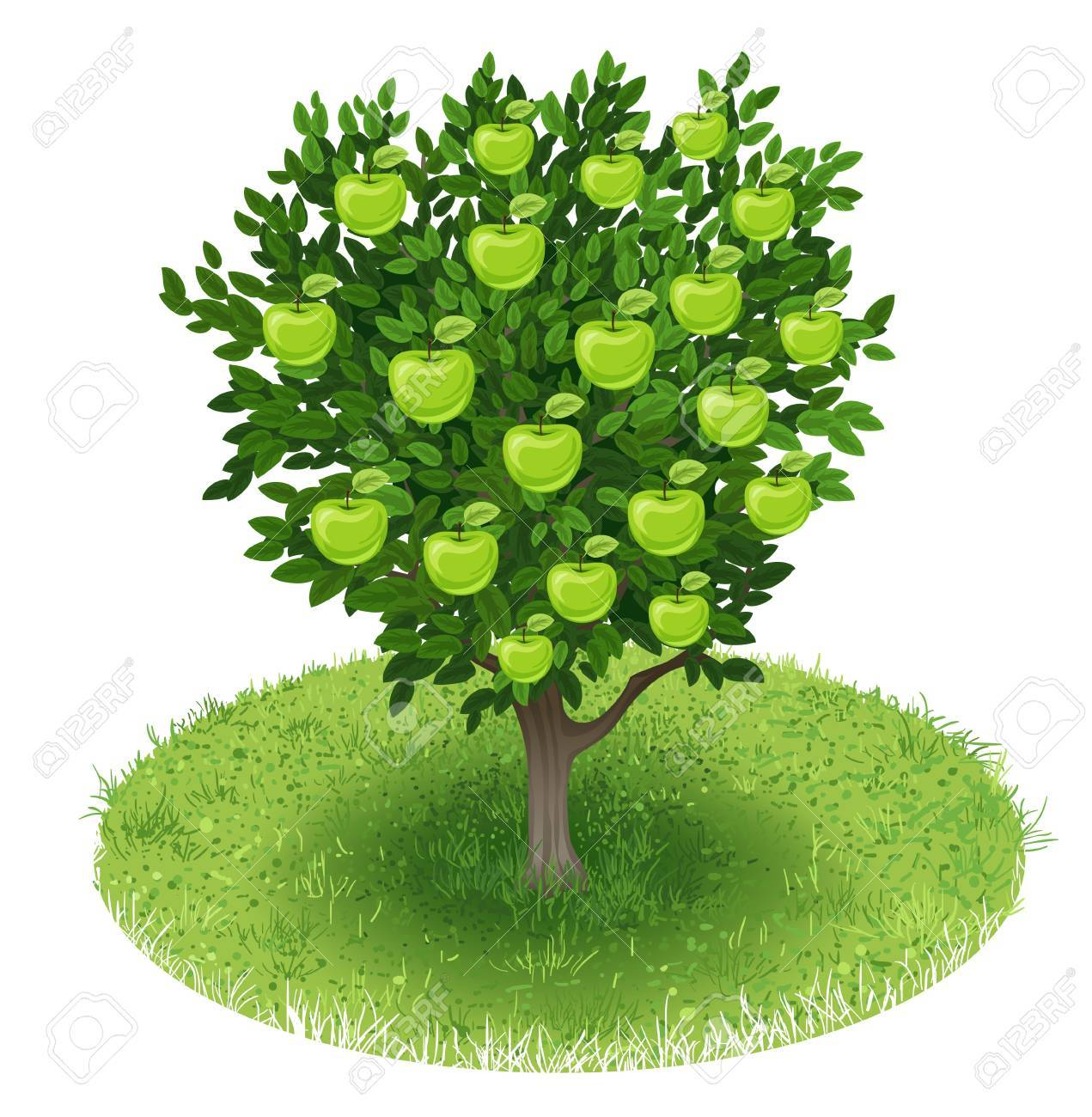 Summer Apple Tree With Green Apple Fruits In Green Field