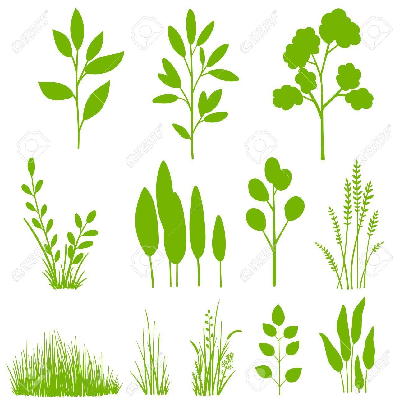 植物葉木のセットです植物クリップ アートグラフィック デザイン