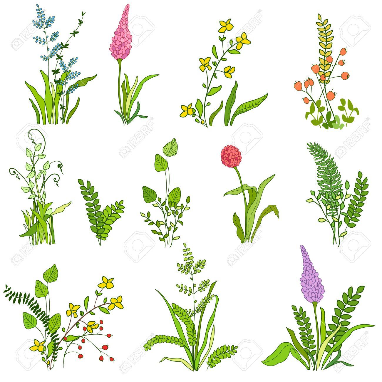 植物葉花のセットです植物クリップ アートグラフィック デザイン