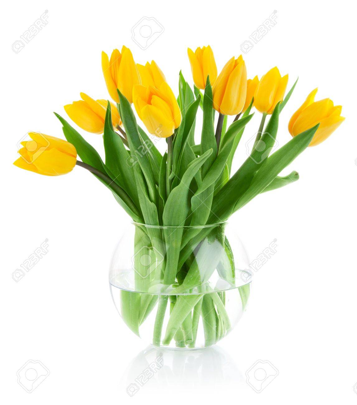 yellow tulip flowers in glass vase isolated on white background Stock Photo - 9251301