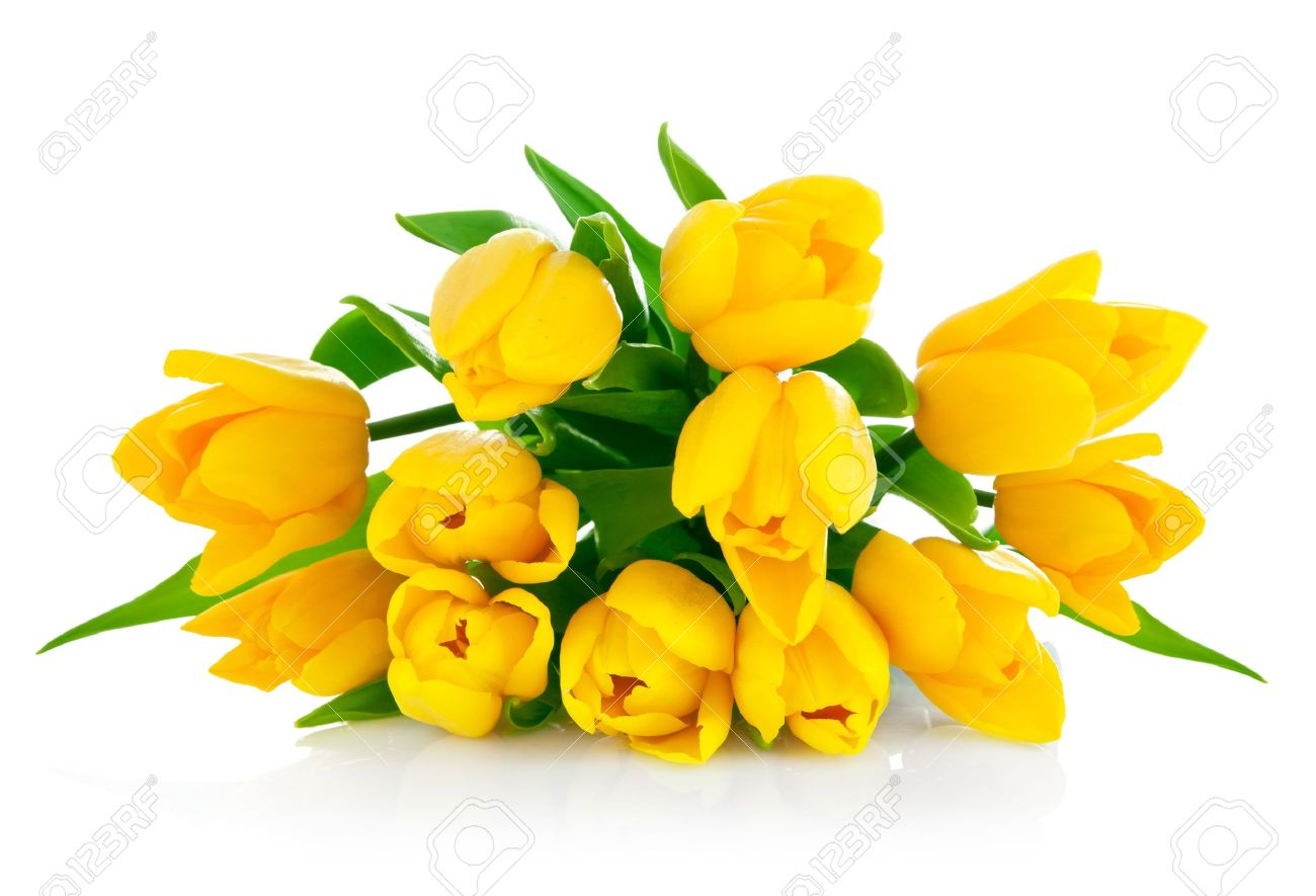 Yellow Tulip Flowers Bouquet Isolated On White Background Stock