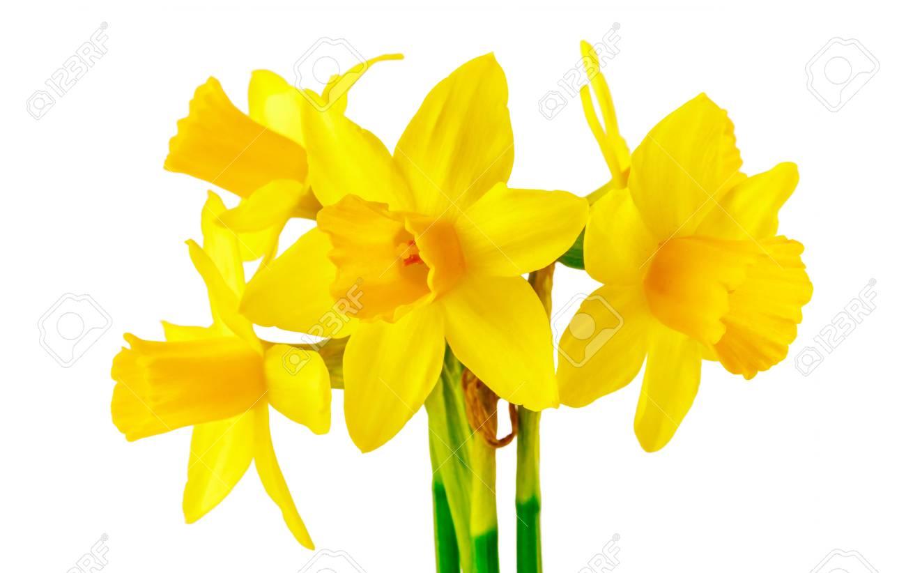 Bouquet Jaune Narcisse Fleur De Printemps Avec Branche Verte Et