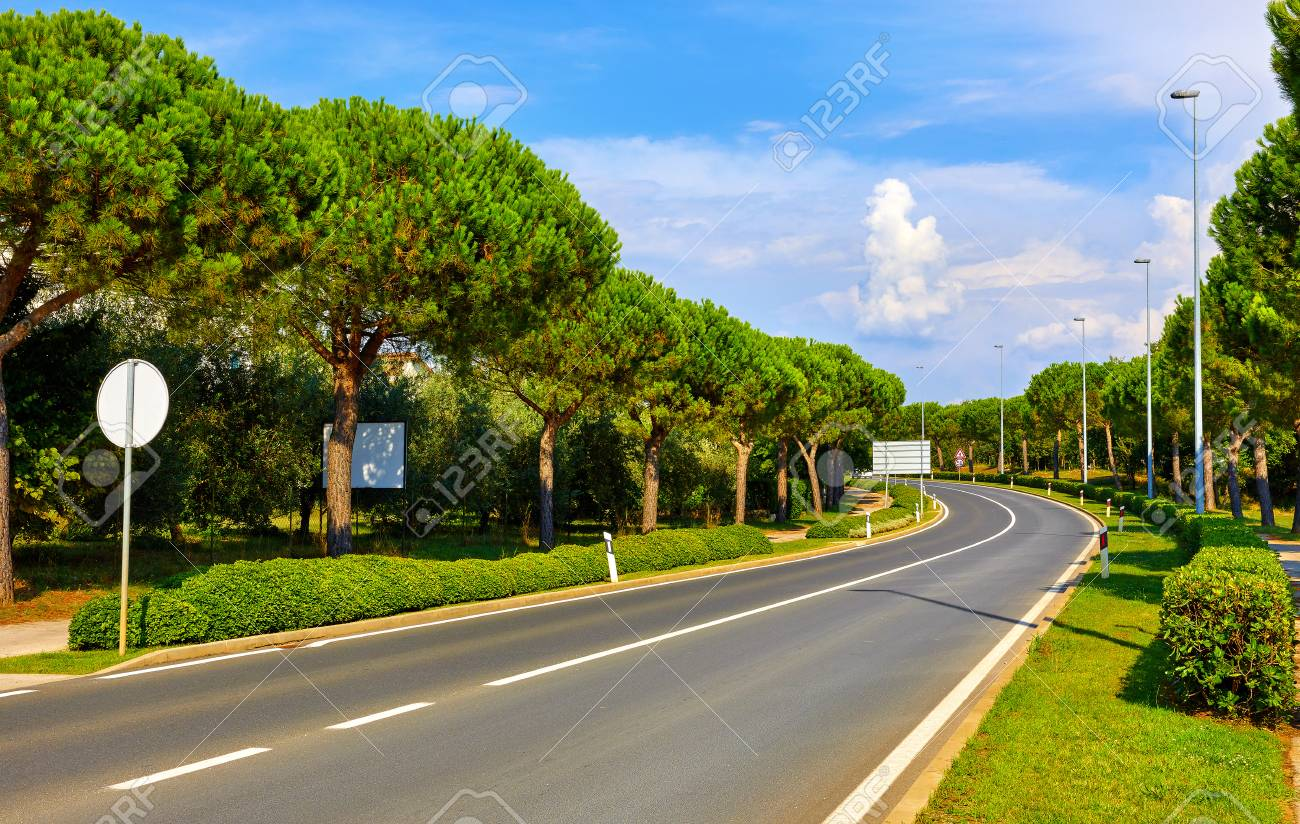 Croatia  Asphalt highway road among conifer trees and green bushes,