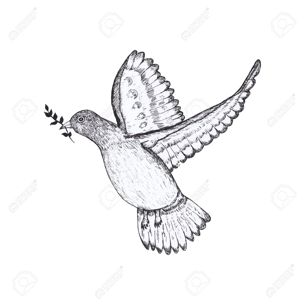 Pigeon Hand Draw Royalty Free Cliparts Vectors And Stock