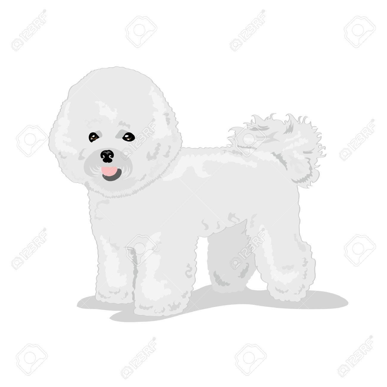 Bichon Frise fluffy dog - 68868813