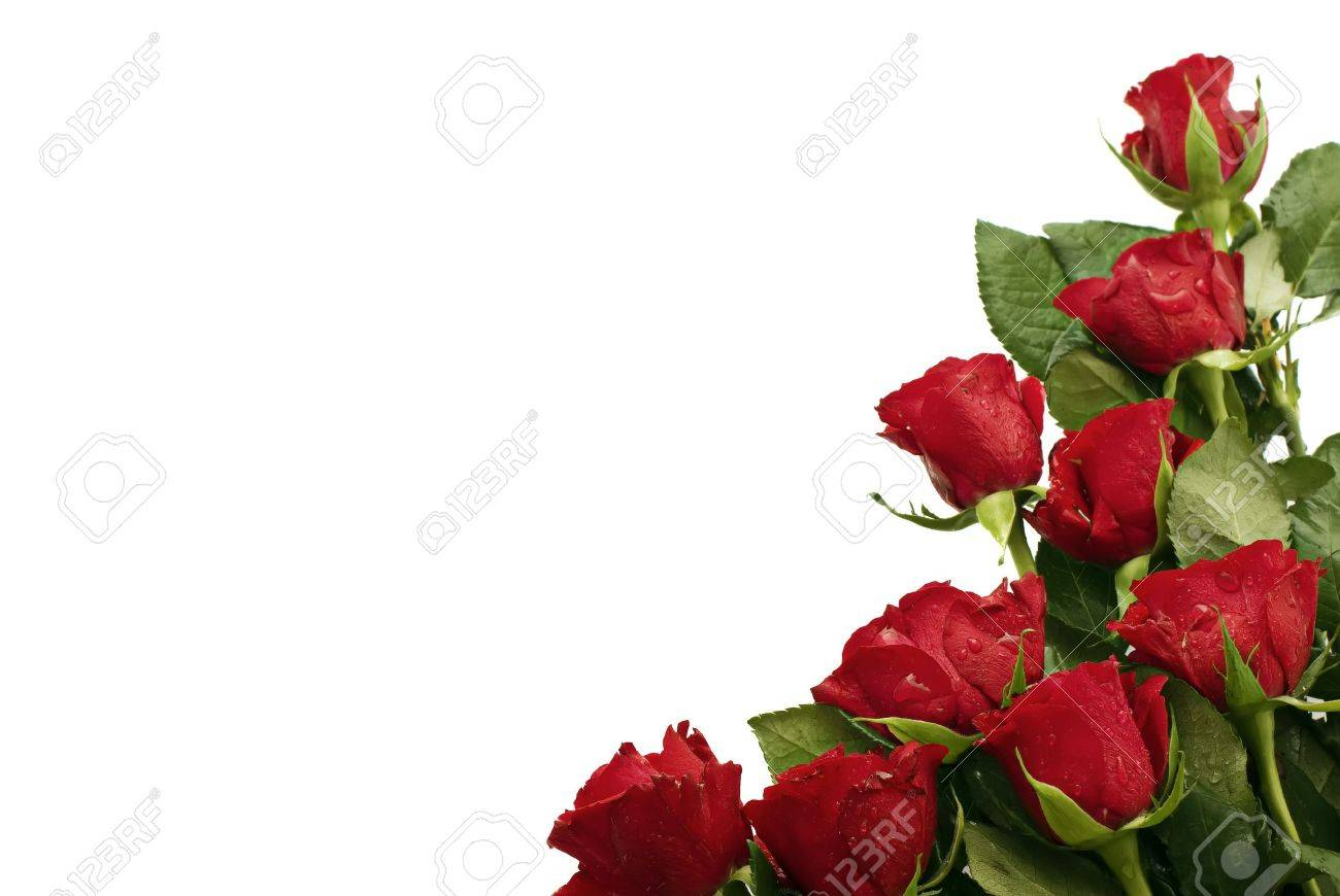 Red Roses Stock Photo - 4806818