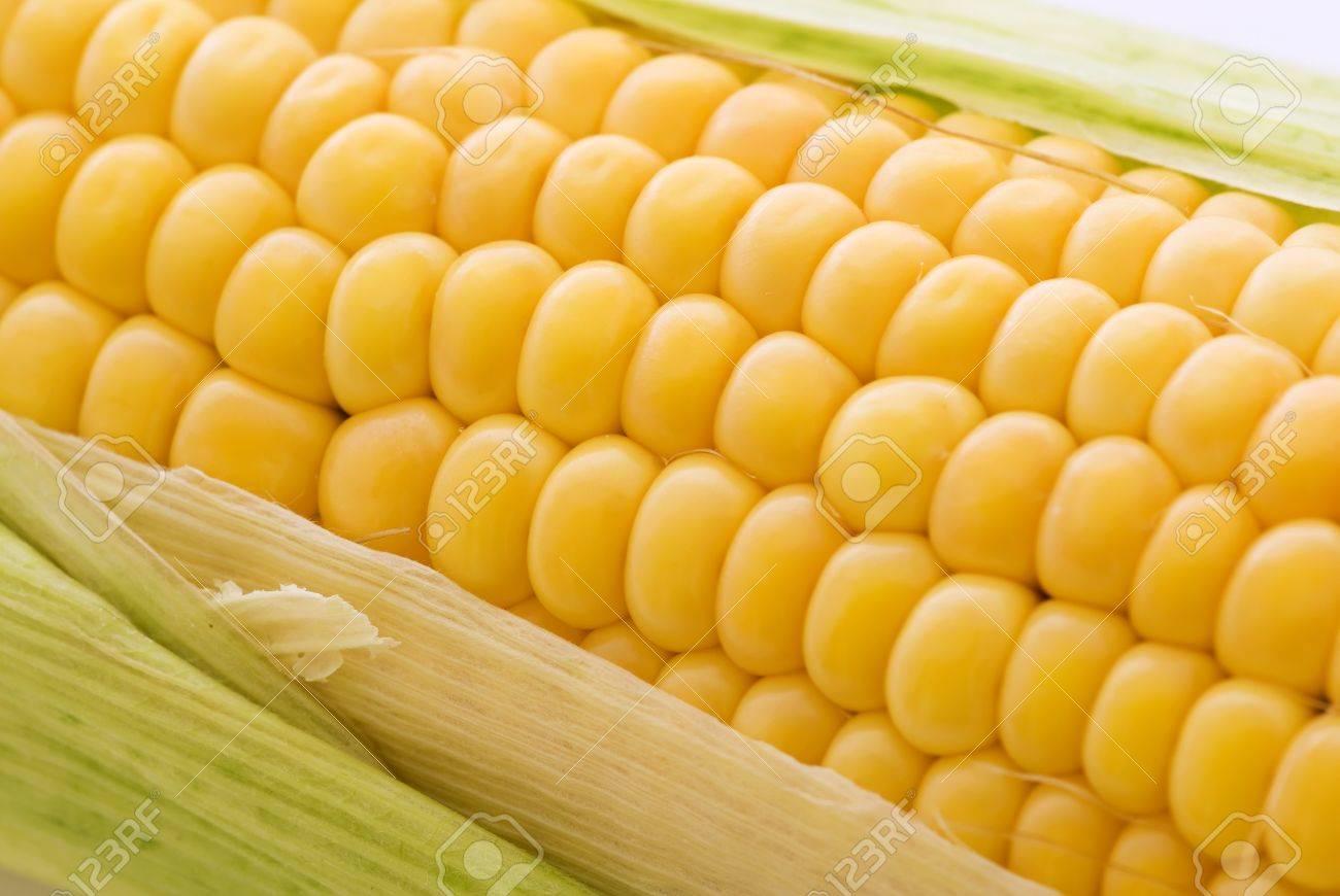 corncob Stock Photo - 8455930