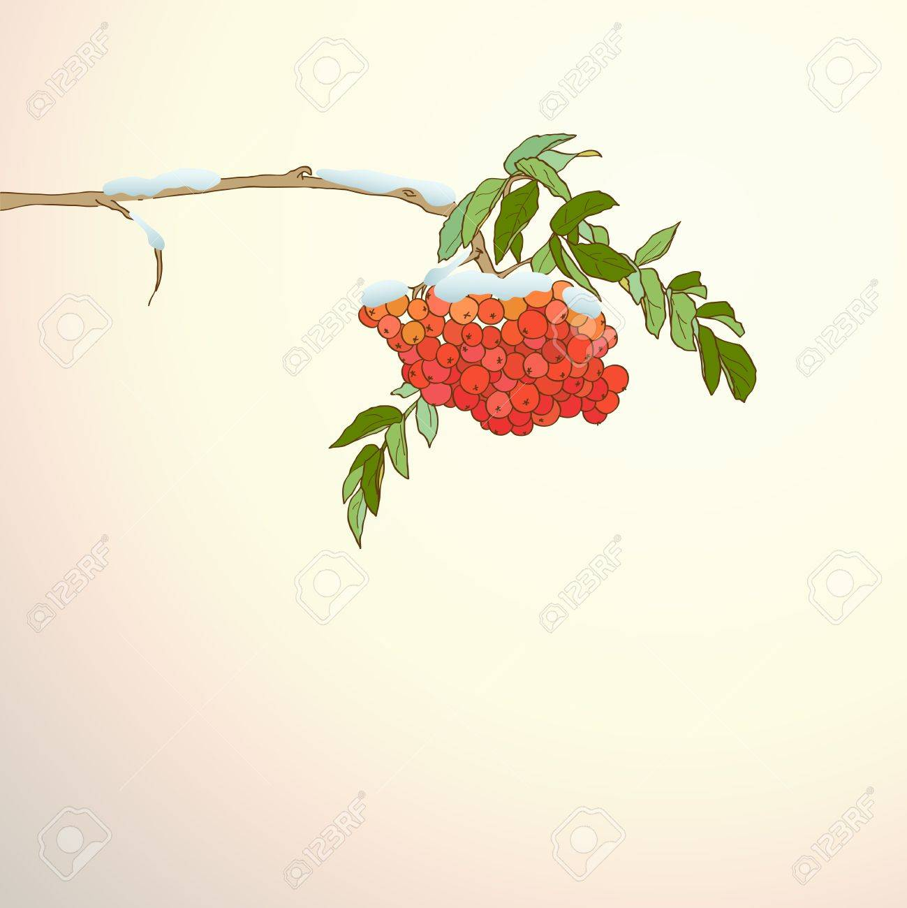 Winter background with rowan branch Stock Vector - 16659947