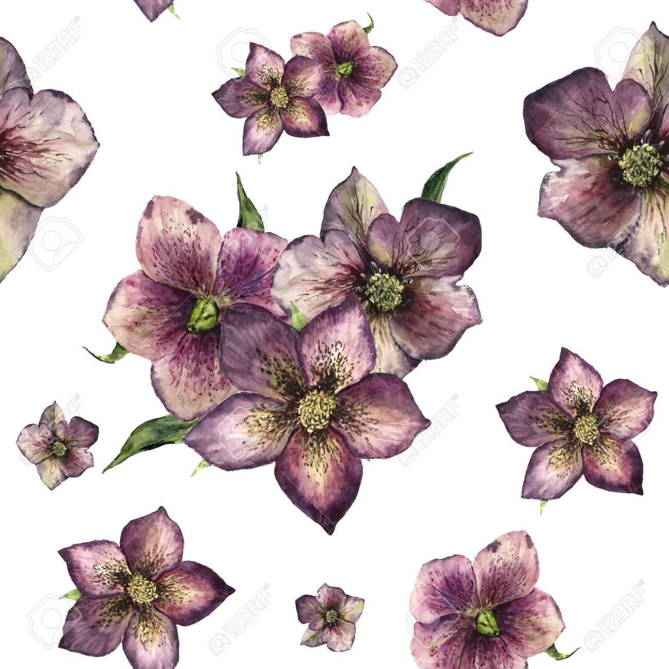Aquarell Blumenmuster Mit Nieswurz. Hand Bemalt Winter Blüten Und ...