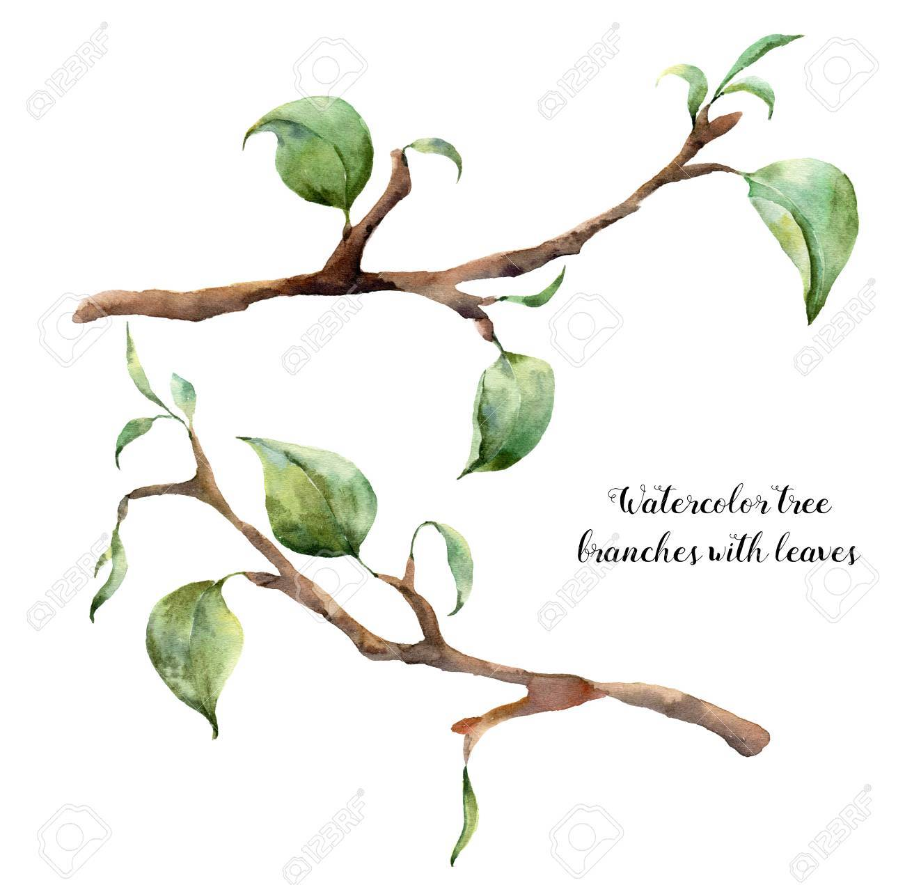Watercolor Tree Branches With Leaves Hand Painted Floral Illustration Stock Photo Picture And Royalty Free Image Image 71133902
