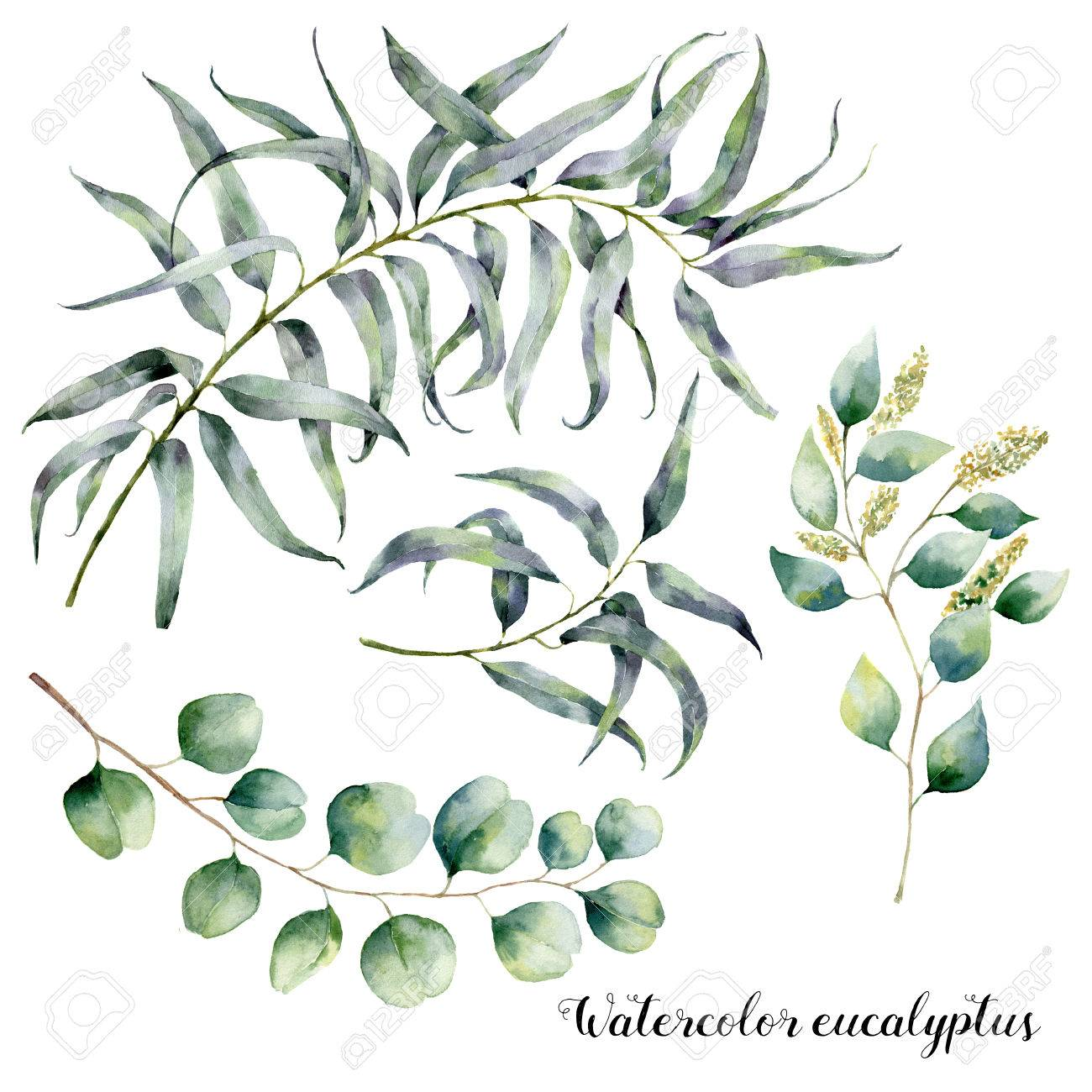 ensemble d'aquarelle avec branche d'eucalyptus. illustration florale