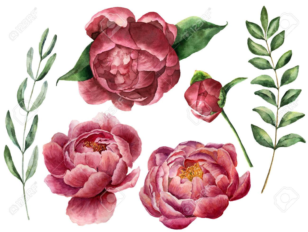 Watercolor floral set with peony and greenery. Hand painted flowers with leaves, branch of eucalyptus and rosemary isolated on white background. Botanical illustration for design. - 78667585