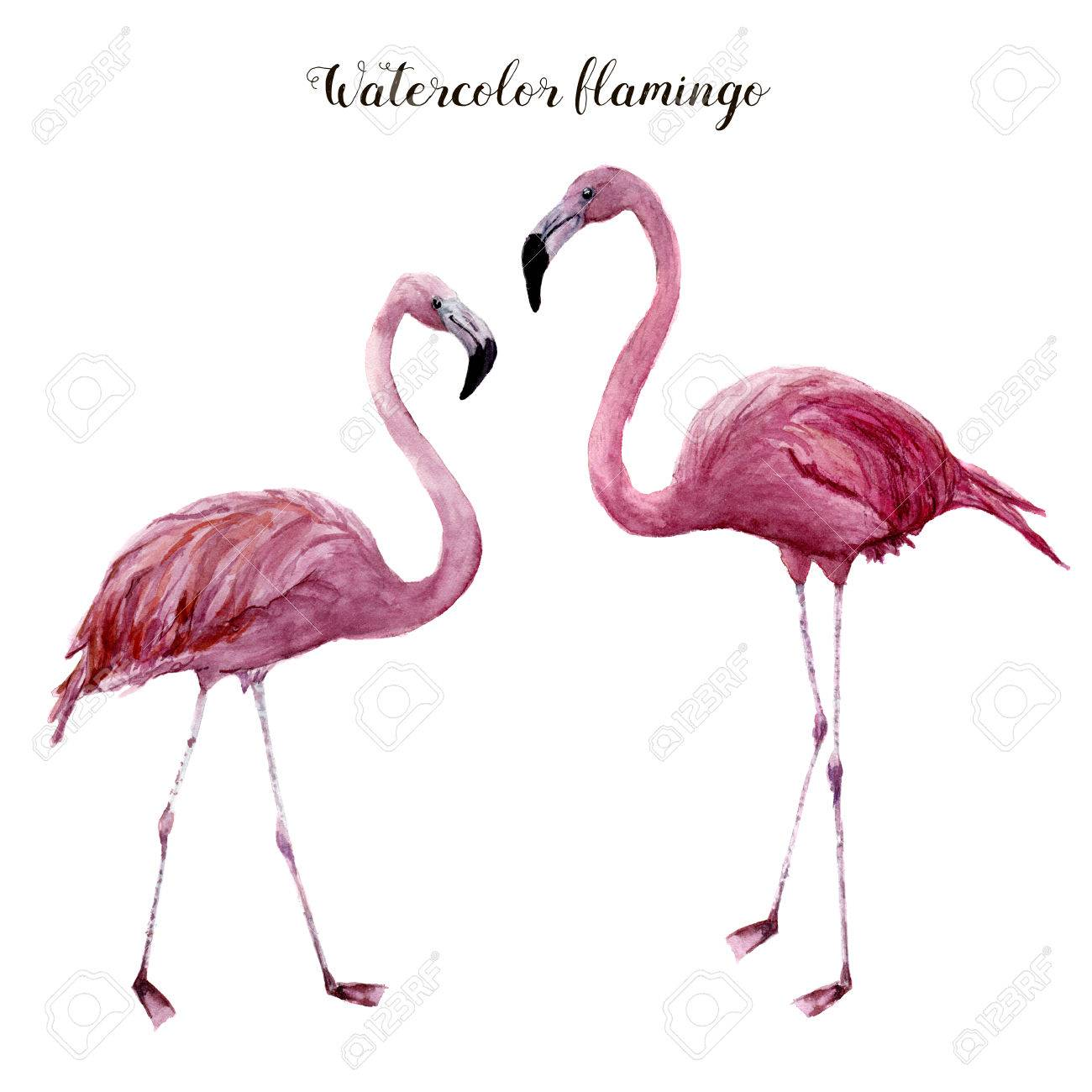 Watercolor flamingo set. Exotic wading bird illustration isolated on white background. Tropical natural illustration. For design, prints or background - 82197563
