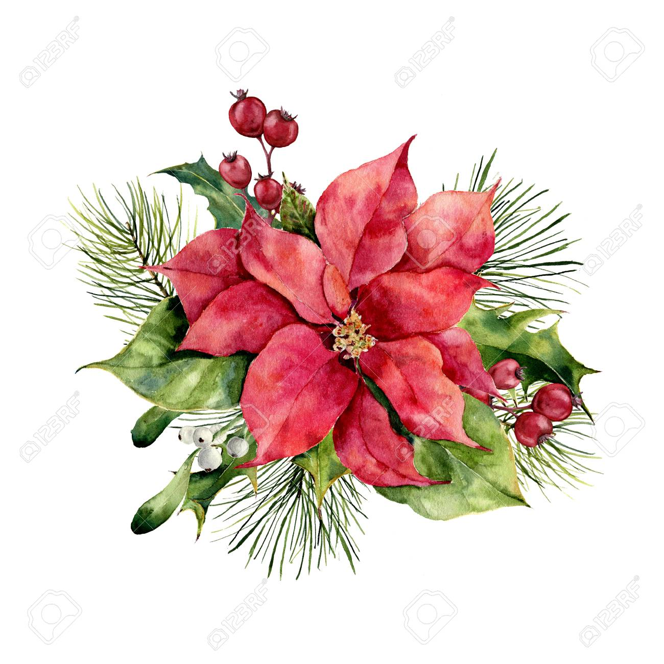 Watercolor poinsettia with Christmas floral decor. Hand painted traditional flower and plants: holly, mistletoe, berries and fir branch isolated on white background. Holiday print. - 89093300
