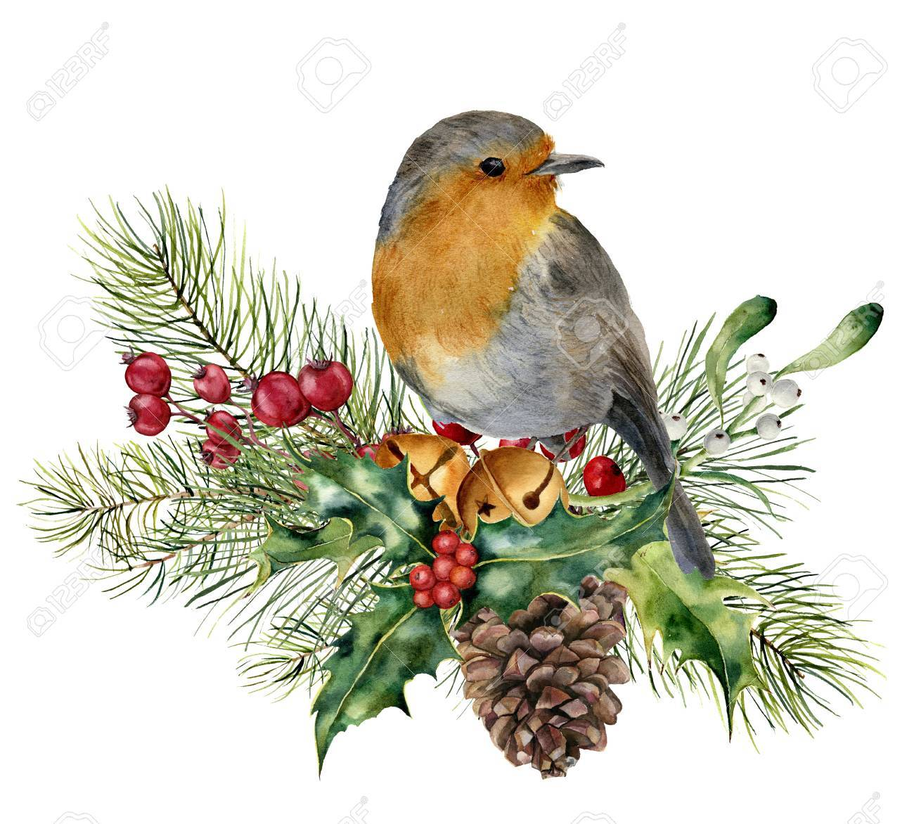 Watercolor Christmas composition with bird. Hand painted robin with fir and berry branch, mistletoe, holly, pine cone and bells isolated on white background. Holiday card - 89705497