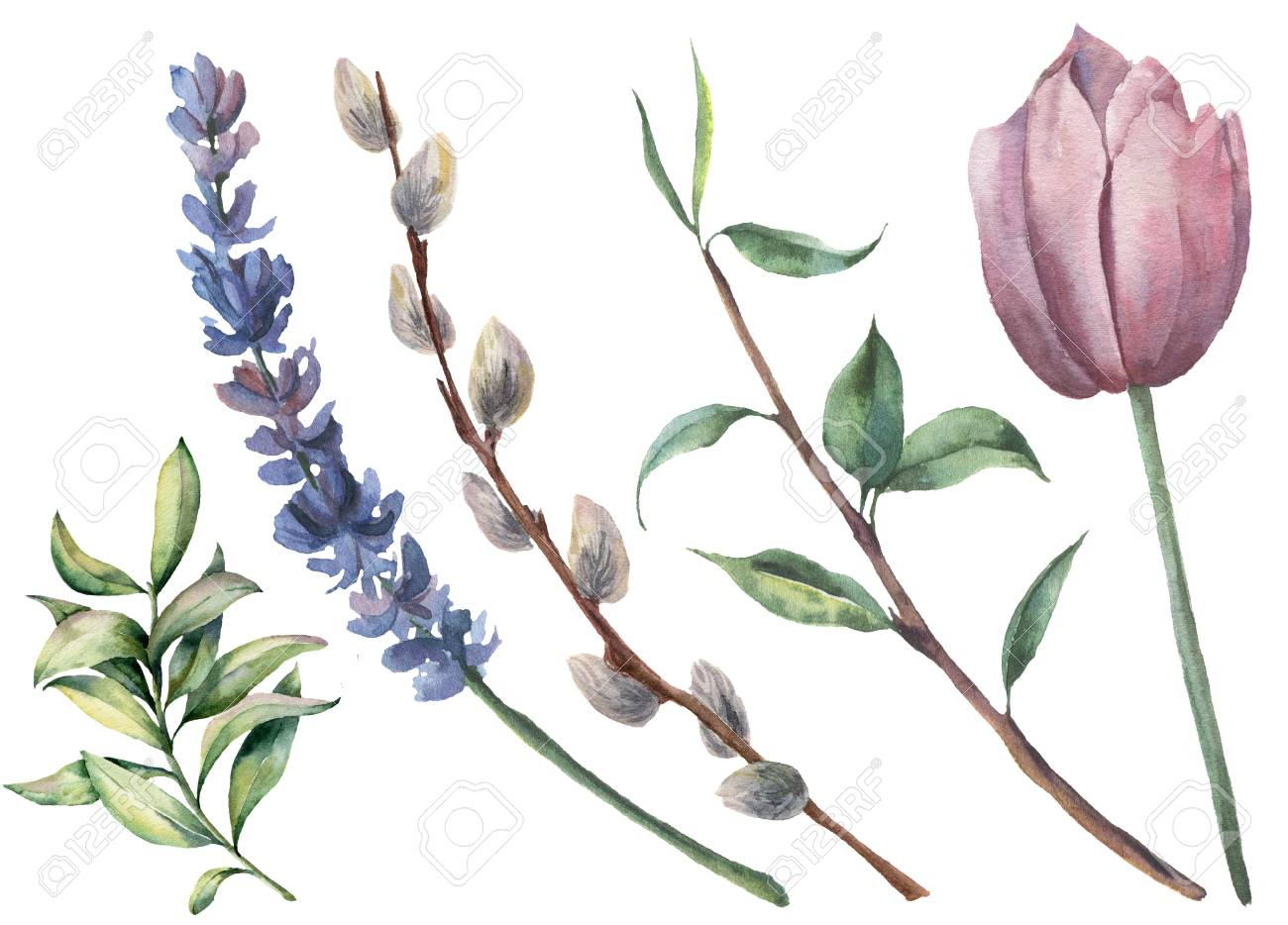 Watercolor spring floral set. Hand painted tulip, tree branch with leaves, lavender flower, willow and greenery isolated on white background. Botanical illustration for design or background. - 96524549