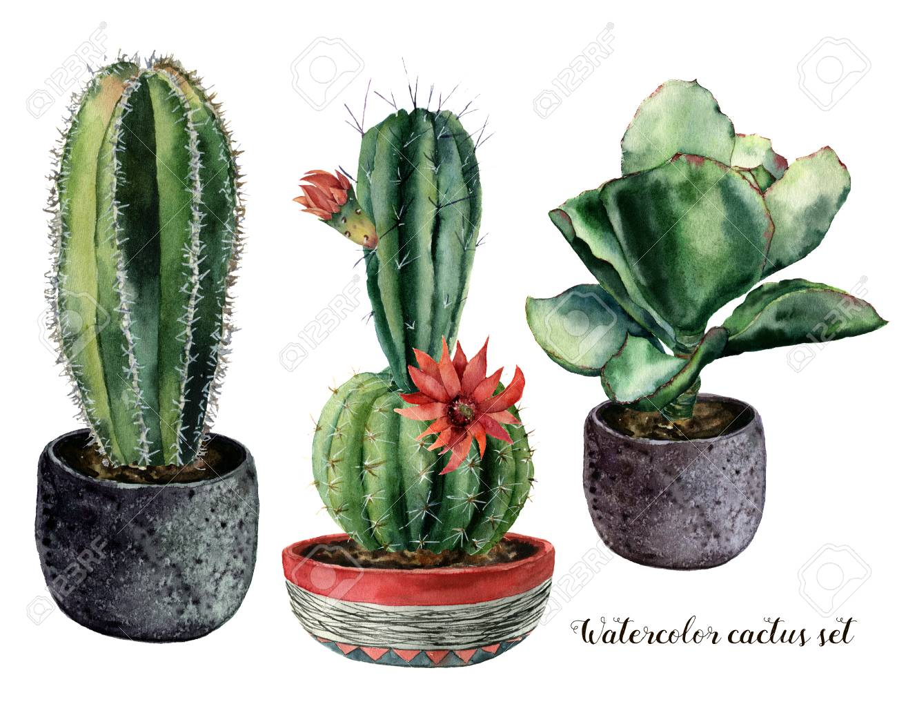 Watercolor set with cactus and flowers in a pot composition. Hand painted cereus and echeveria with red flower isolated on white background. Illustration for design, print, fabric or background. - 99287442