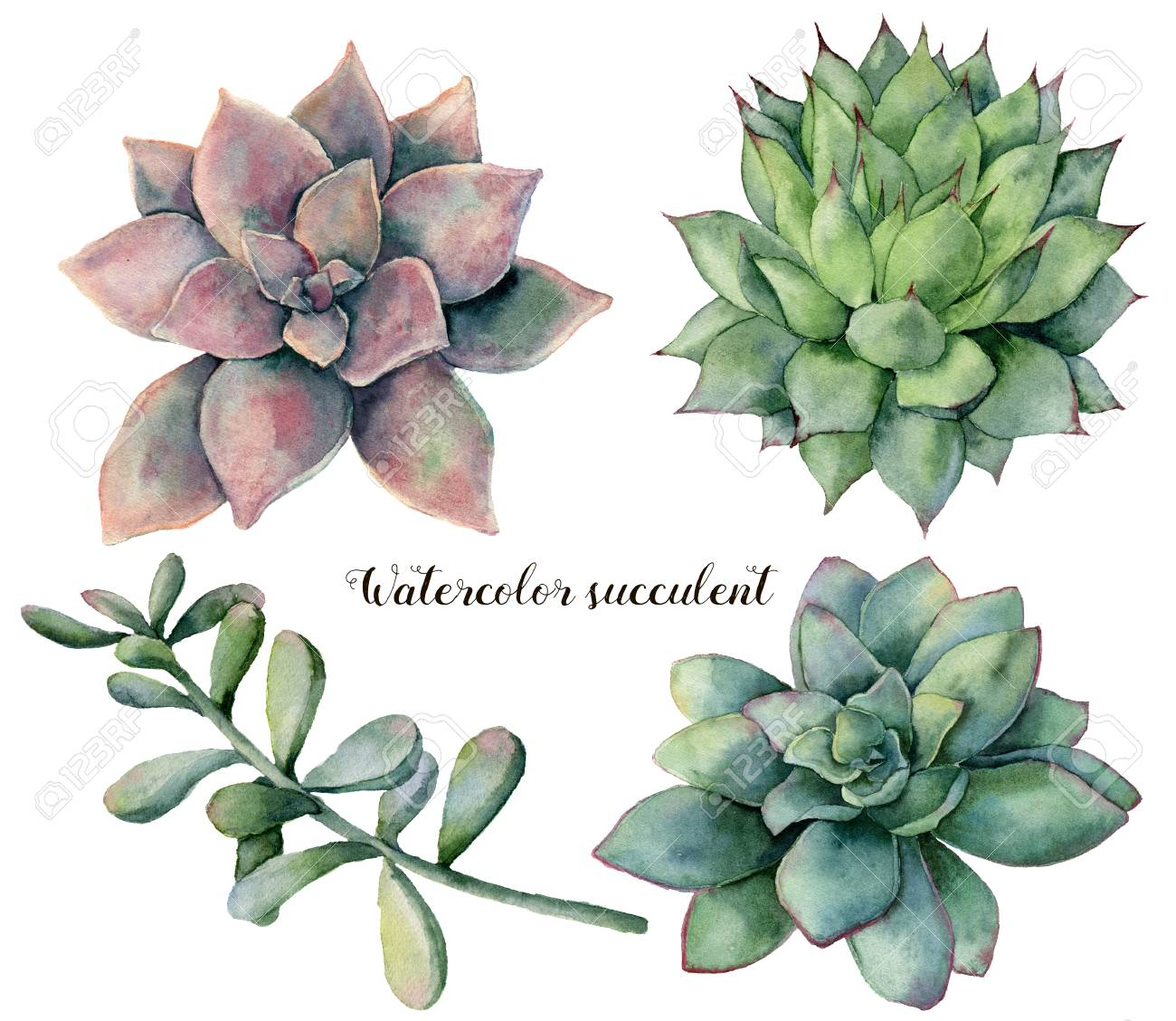 Watercolor Set With Succulent And Branch Hand Painted Colorful Stock Photo Picture And Royalty Free Image Image 100895723
