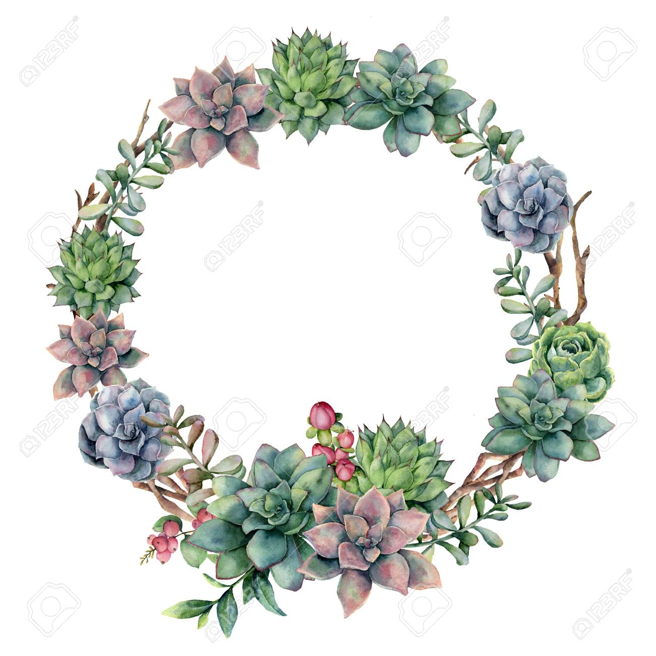 Watercolor Succulent And Berries Wreath Hand Painted Succulent Stock Photo Picture And Royalty Free Image Image 100915143