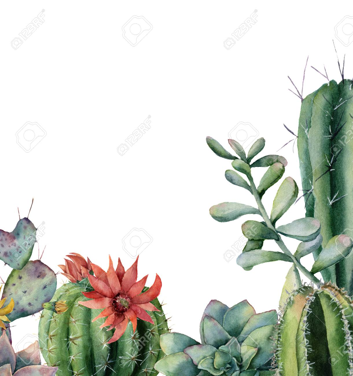 Watercolor Card With Flowering Cactuses And Succulents Hand Stock Photo Picture And Royalty Free Image Image 106513244