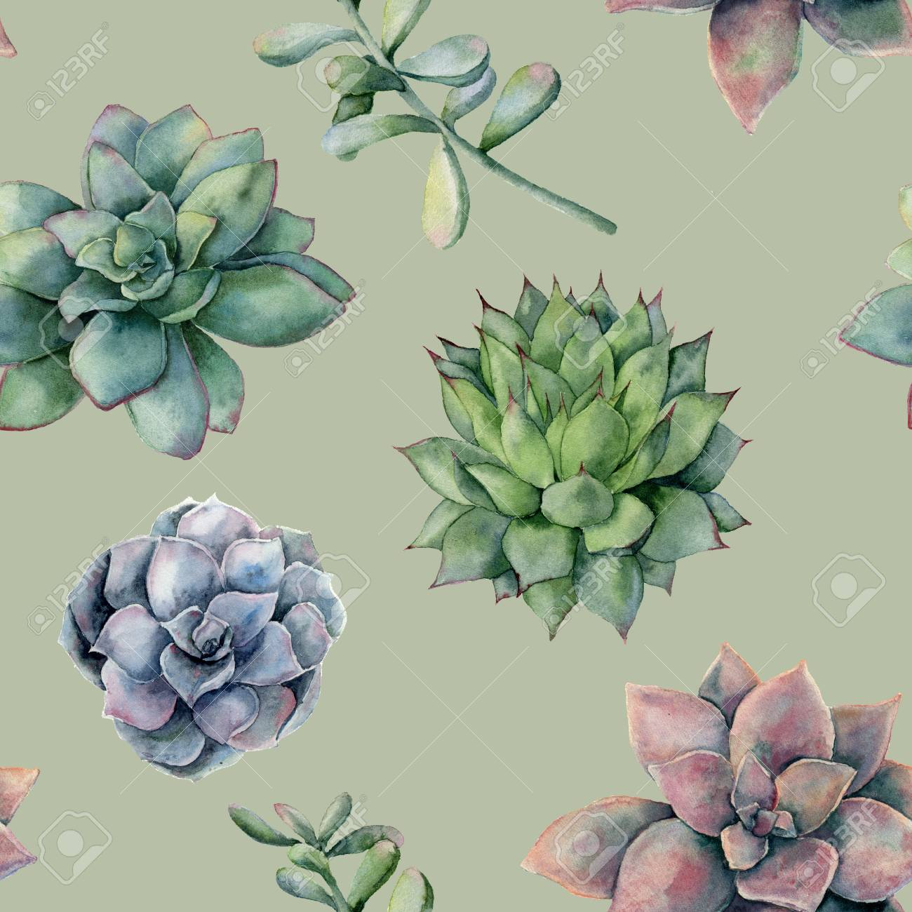 Watercolor Pattern With Colorful Succulents Hand Painted Ornament Stock Photo Picture And Royalty Free Image Image 108610894