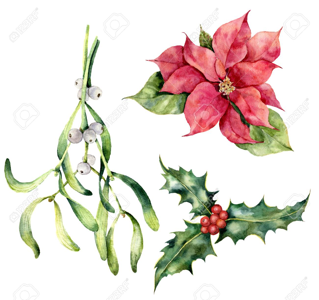 Watercolor Christmas Plants Hand Painted Poinsettia Mistletoe