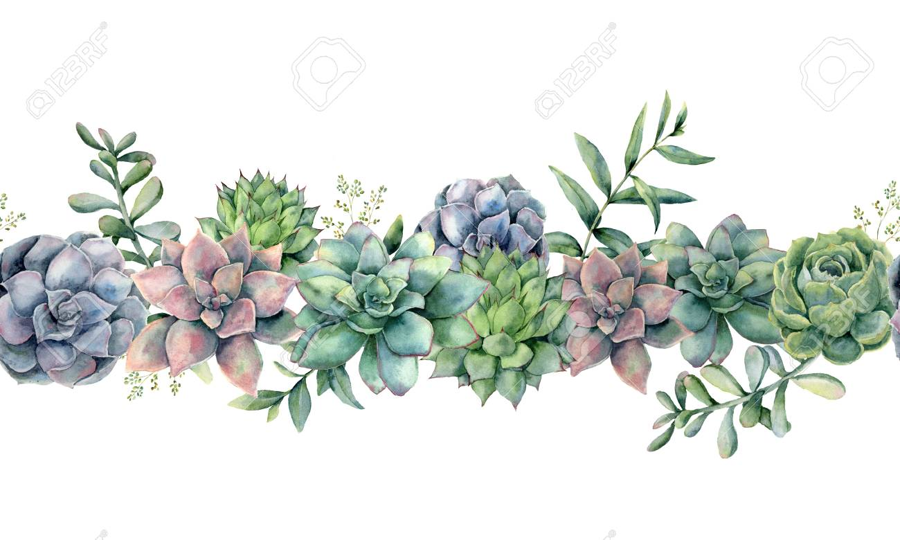 Watercolor Succulents Seamless Bouquet Hand Painted Green Violet Stock Photo Picture And Royalty Free Image Image 114631164