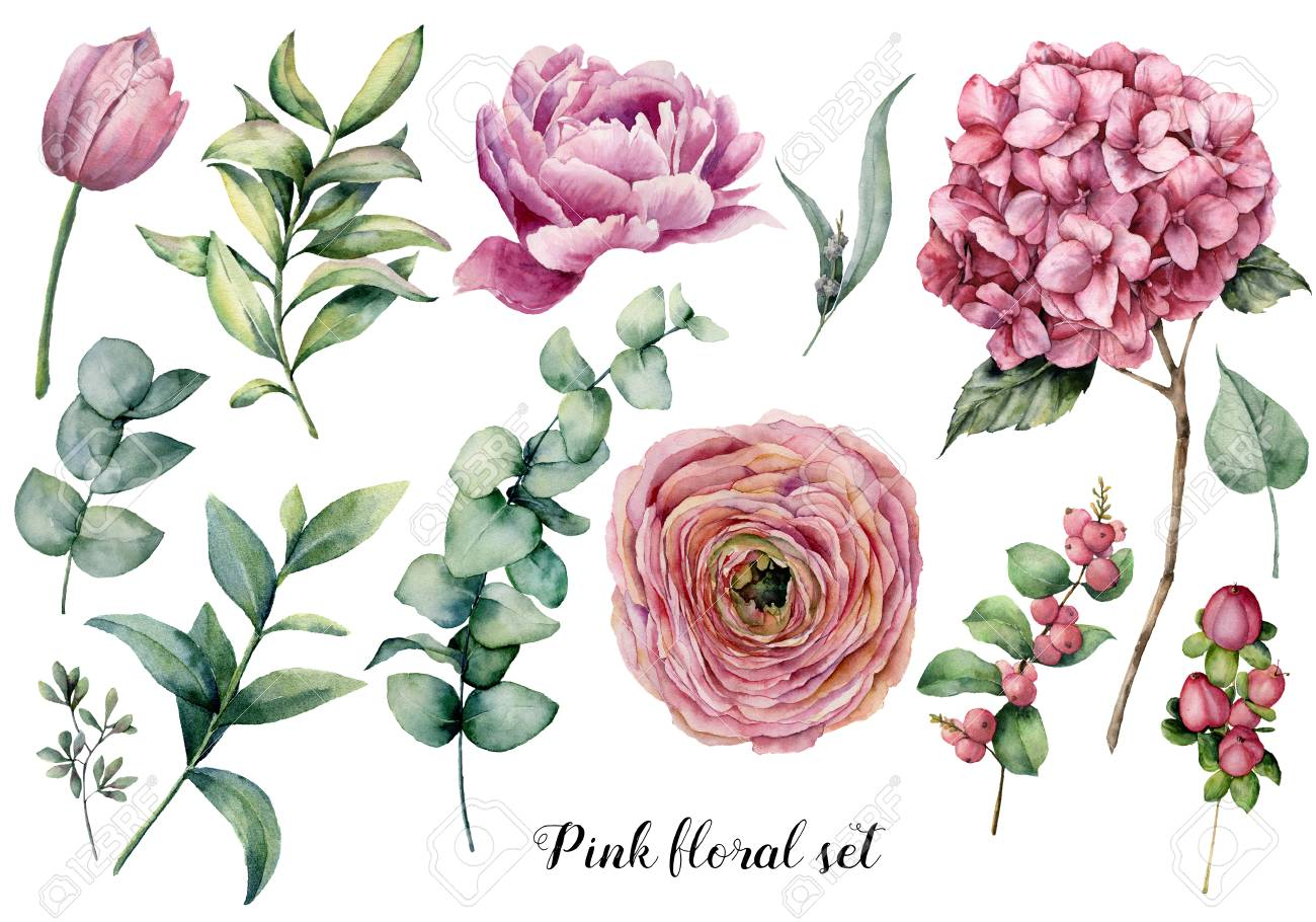 Hand painted floral elements. Watercolor botanical illustration with ranunculus, tulip, peony, hydrangea flowers, berries and eucalyptus leaves isolated on white background. Nature objects for design - 116175147