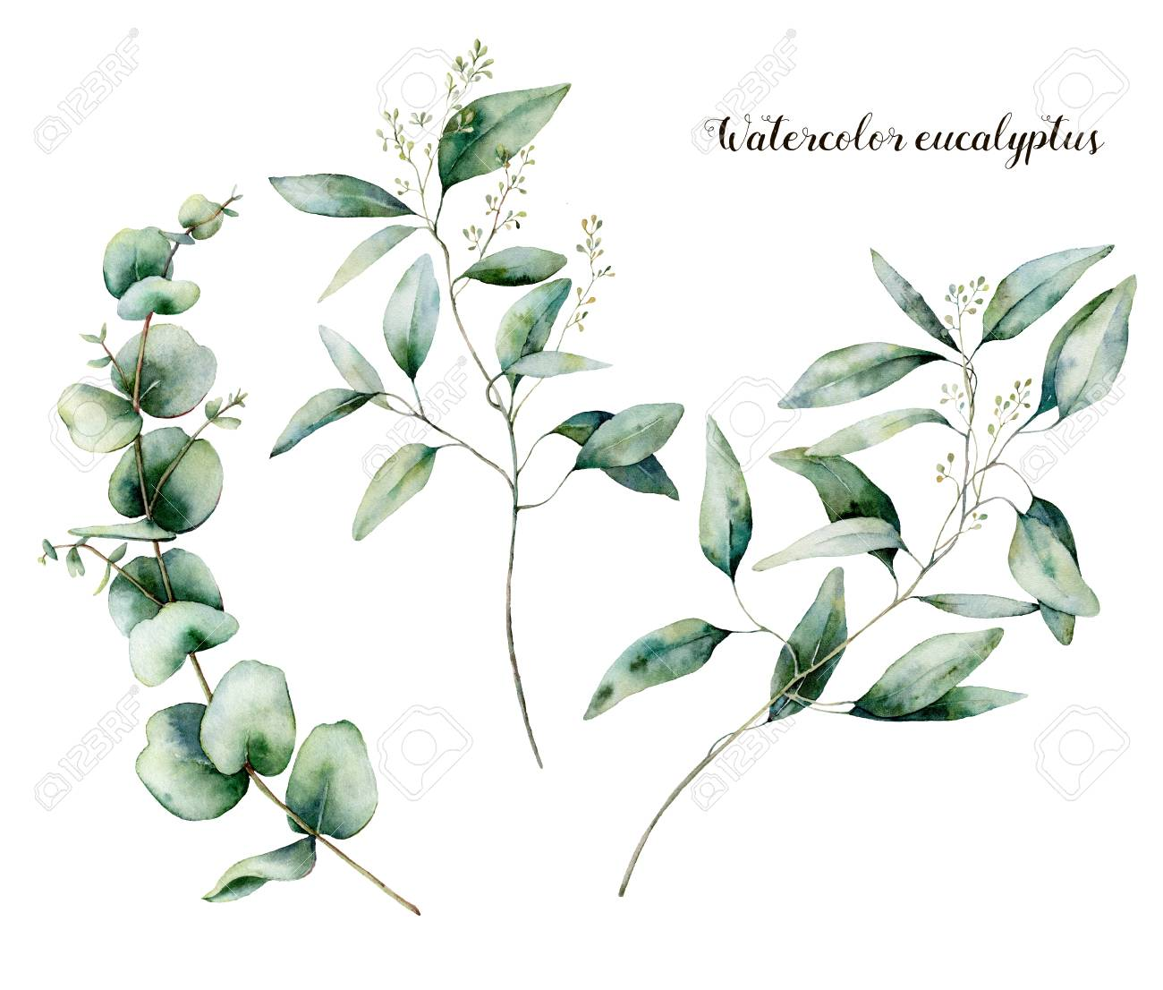 Watercolor seeded eucalyptus set. Hand painted eucalyptus branch and leaves isolated on white background. Floral illustration for design, print, fabric or background. - 118928100