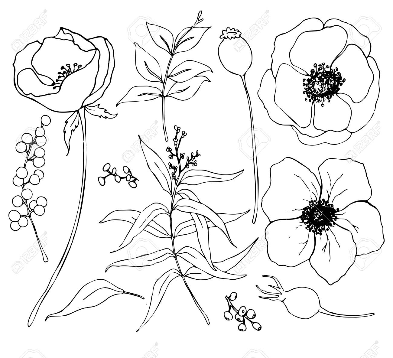 Vector collection of hand drawn plants with eucalyptus and anemone. Botanical set of sketch flowers and branches with eucalyptus leaves isolated on white background for design, print or fabric. - 119248086