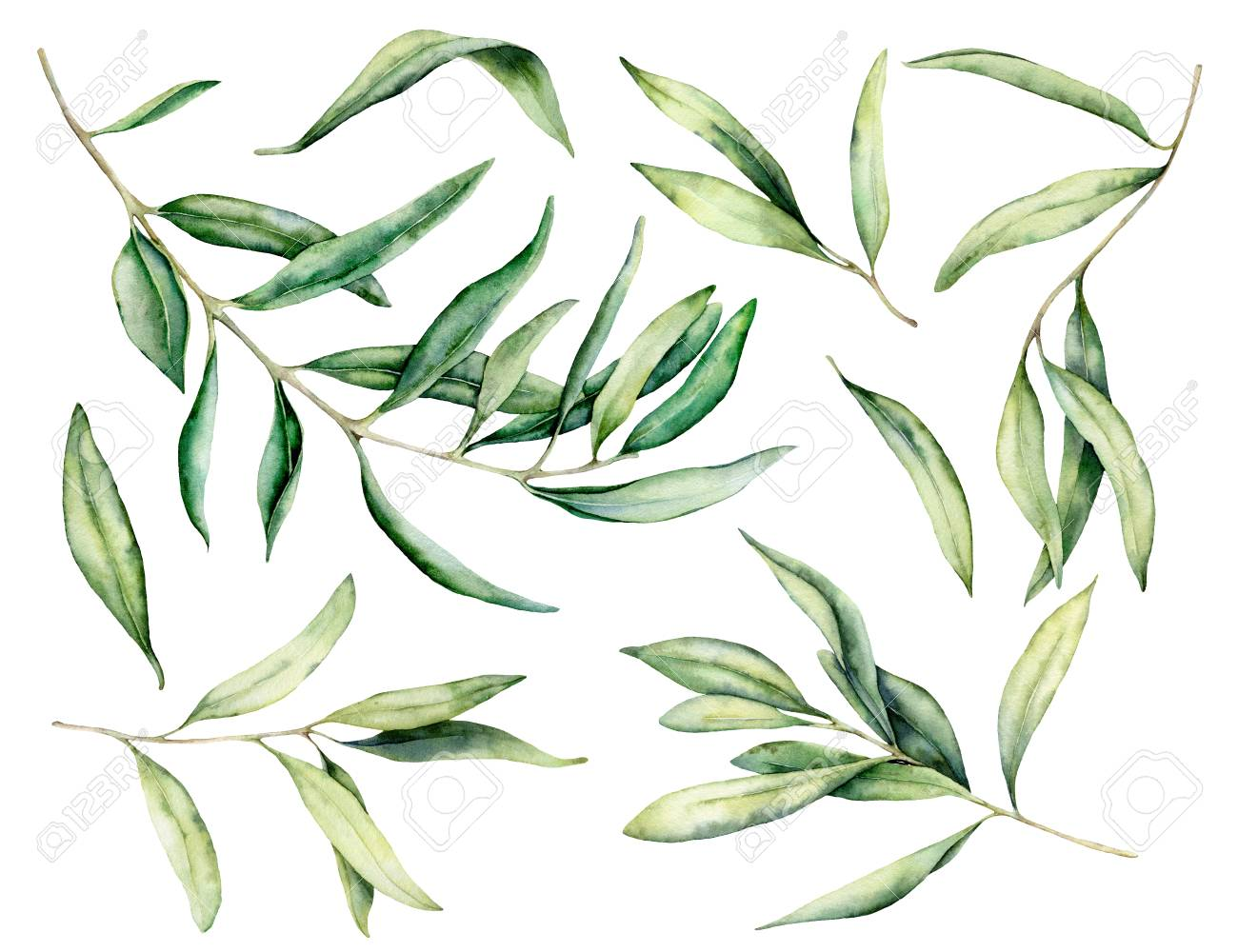 Watercolor olive branch and leaves set. Hand painted floral illustration isolated on white background for design, print, fabric or background. - 121767295