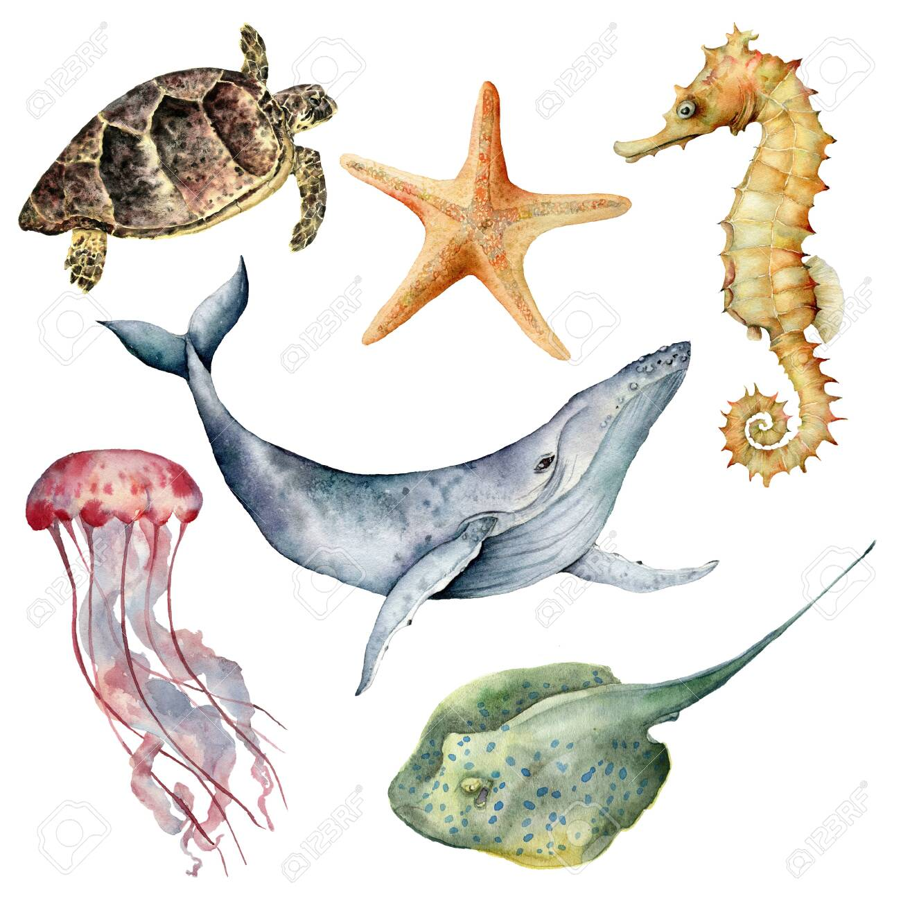 Watercolor underwater animals set. Hand painted whale, starfish, seahorse, stingray, jellyfish and turtle isolated on white background. Aquatic illustration for design, print or background. - 123829489