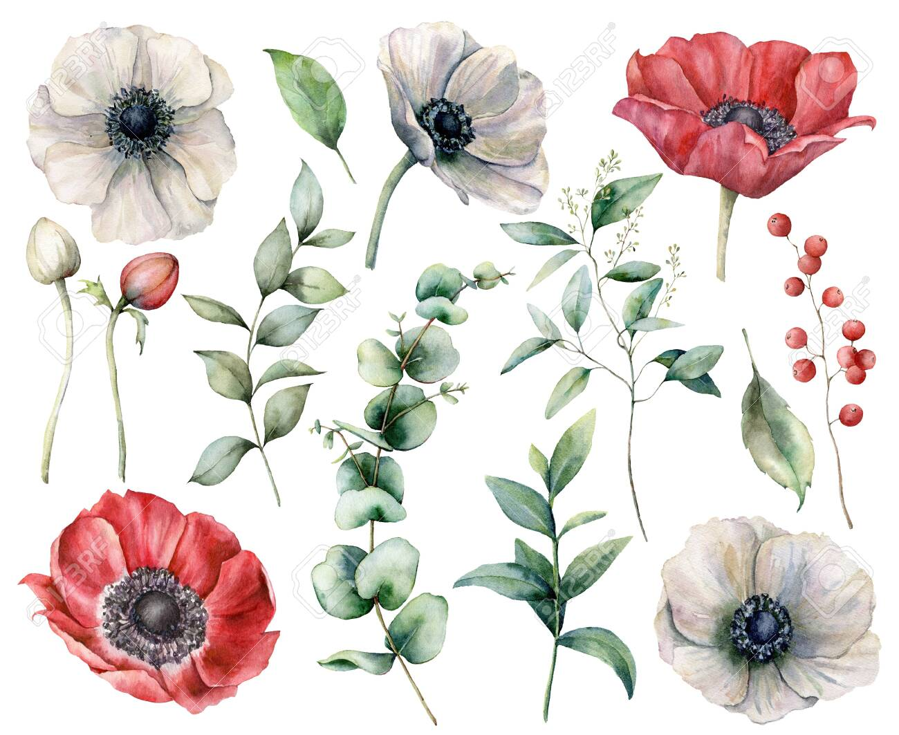 Watercolor floral set with red and white anemones. Hand painted flowers, buds, berries and eucalyptus leaves isolated on white background. Spring illustration for design, print, fabric or background. - 147764450