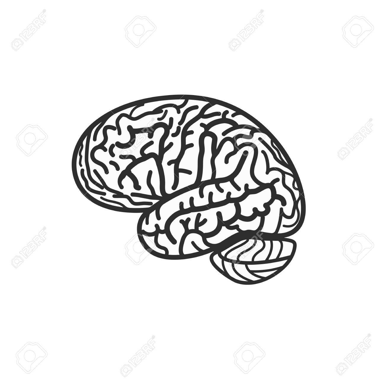 Isolated Black And White Brain Contour Vector Logo. Gyrus Silhouette ...
