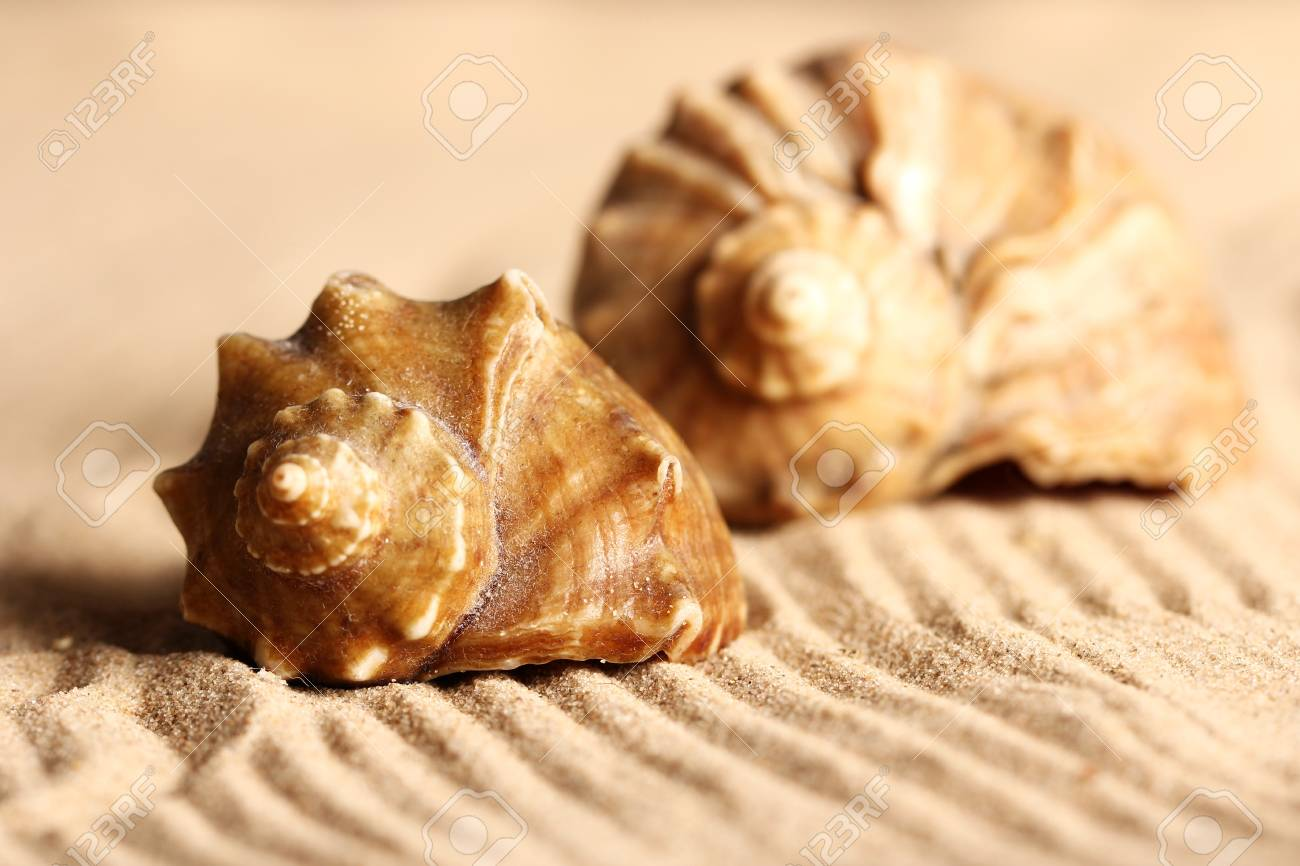 Close up of seashells on the sand Stock Photo - 12769643