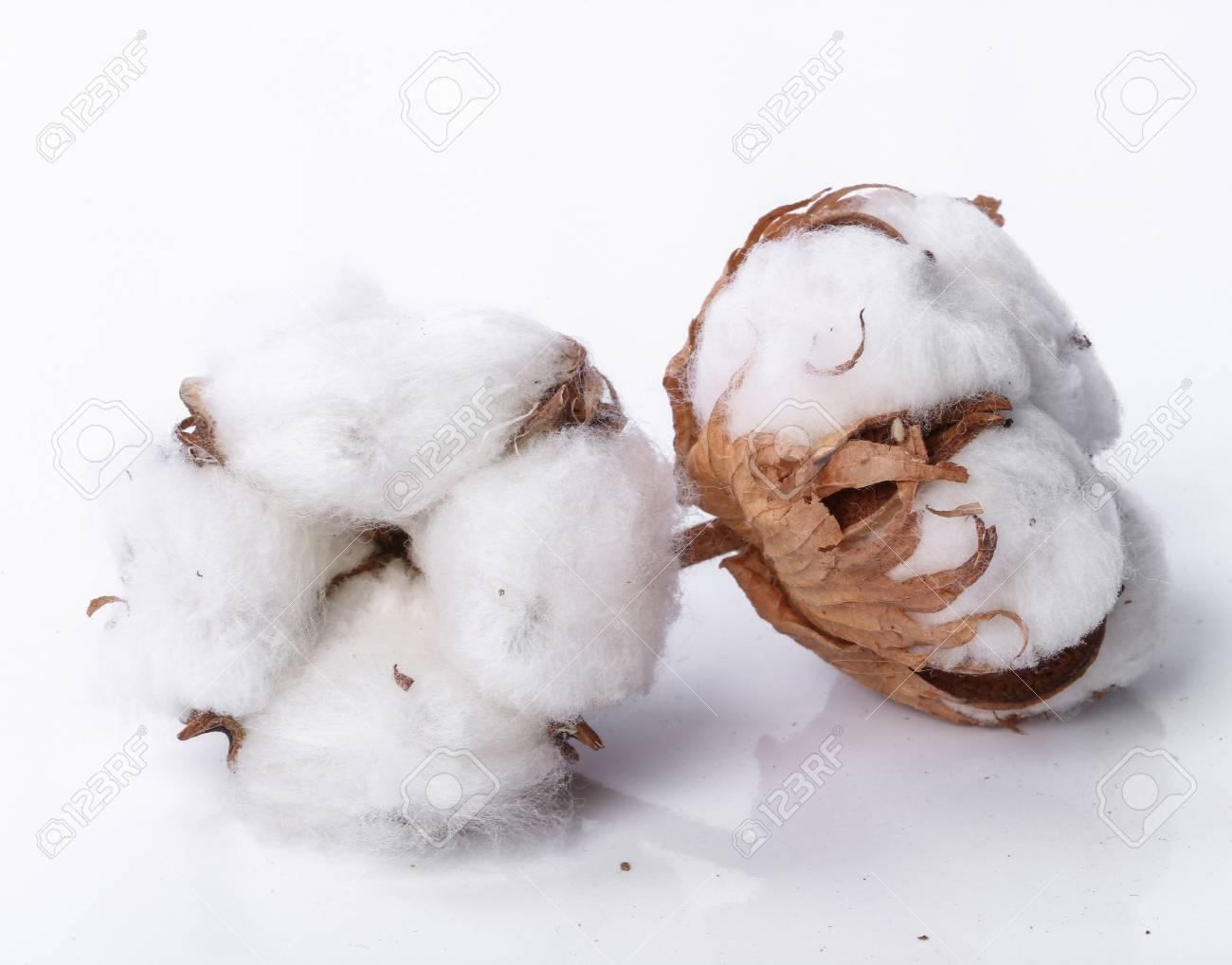 4d51071667 Fiore di cotone su uno sfondo bianco