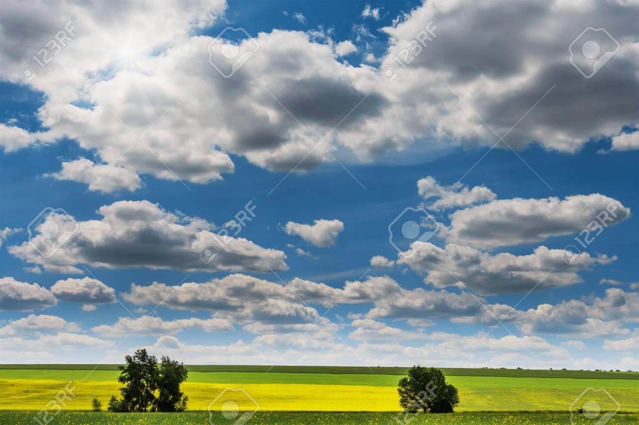 Vista Granangular De Un Campo Hermoso Del Canola O De La Colza Amarillo Brillante Delante De Un Bosque