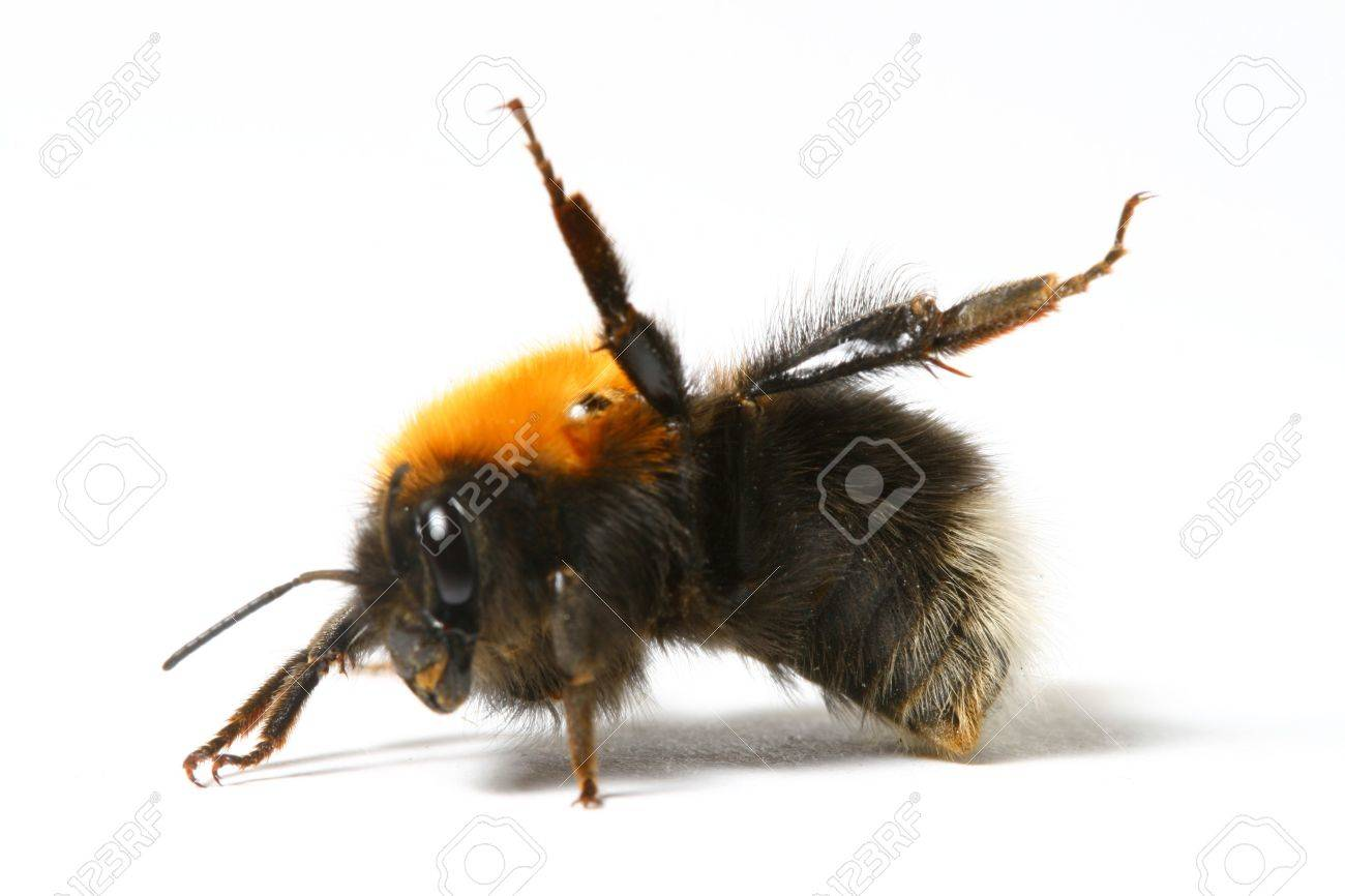 dance aerobic bumble bee isolated on white background stock photo