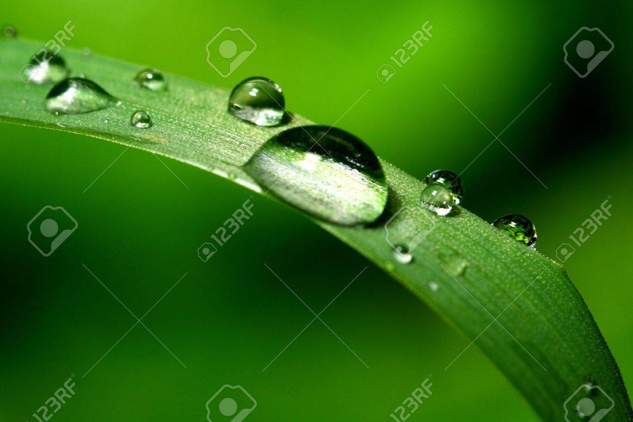 natural waterdrop on green leaf macro Stock Photo - 3379942
