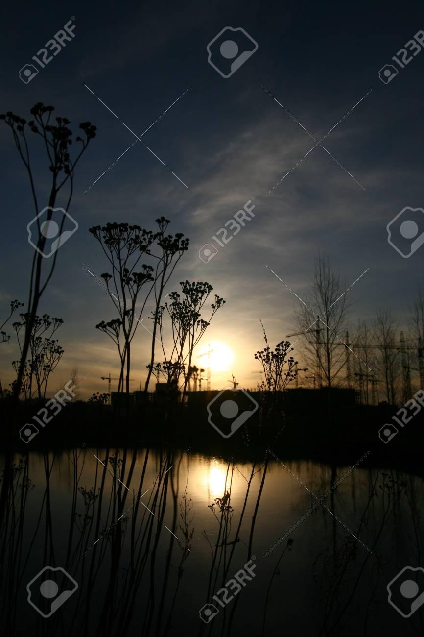 beautiful sunset with grass background Stock Photo - 3402873