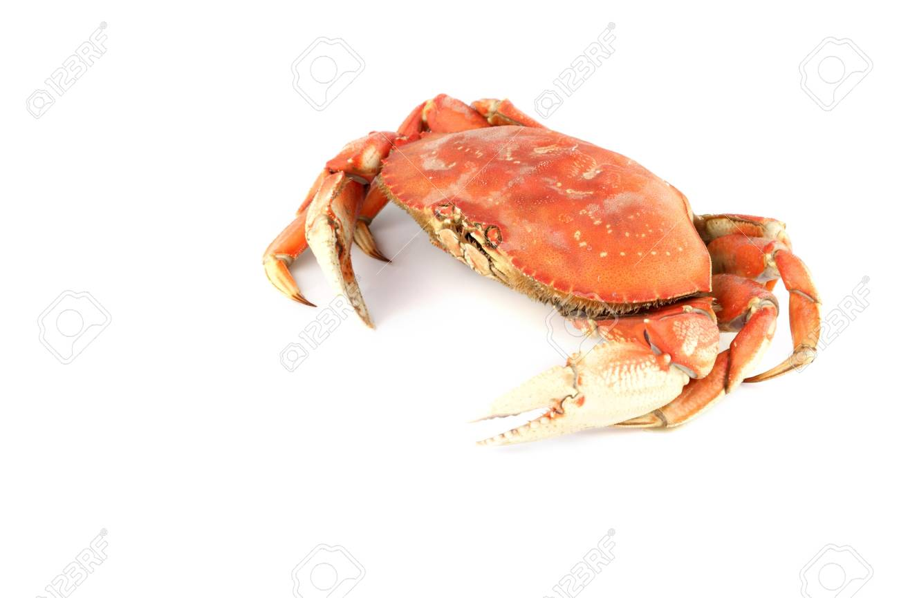 dungeness crab isolated on white Stock Photo - 4644339