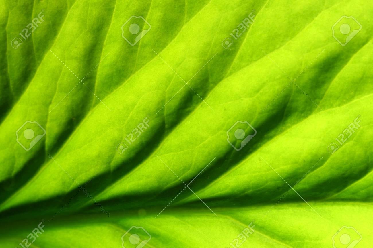 summer green leaf macro close up Stock Photo - 5012702