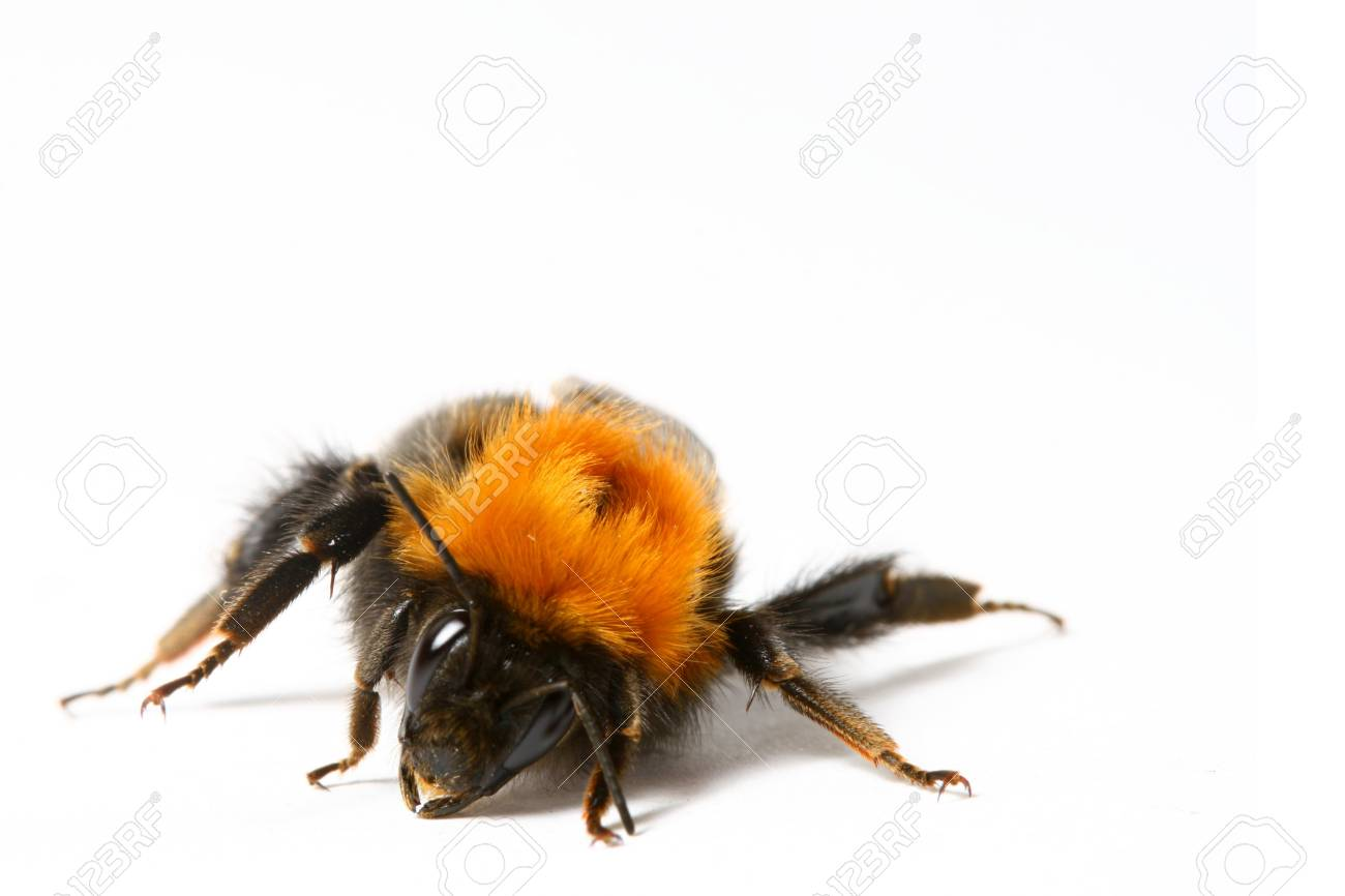 dance aerobic bumble bee isolated on white background Stock Photo - 5019786