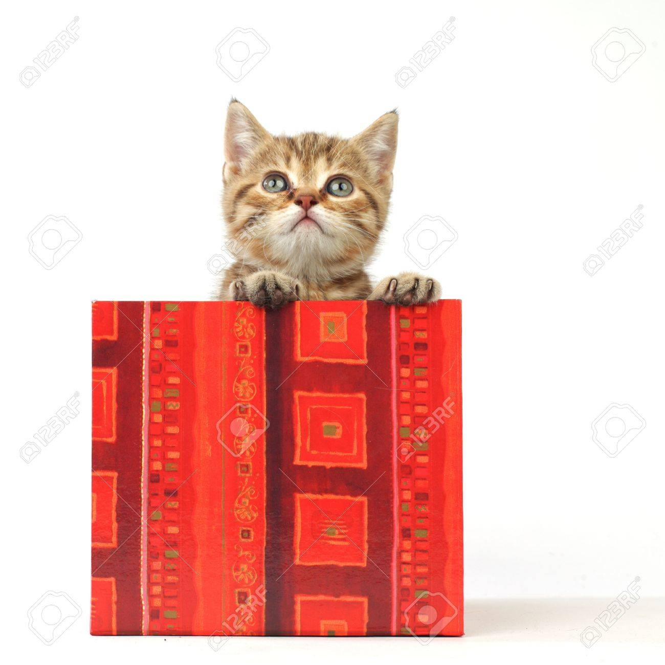 cat in gift box isolated on white background Stock Photo - 8415744